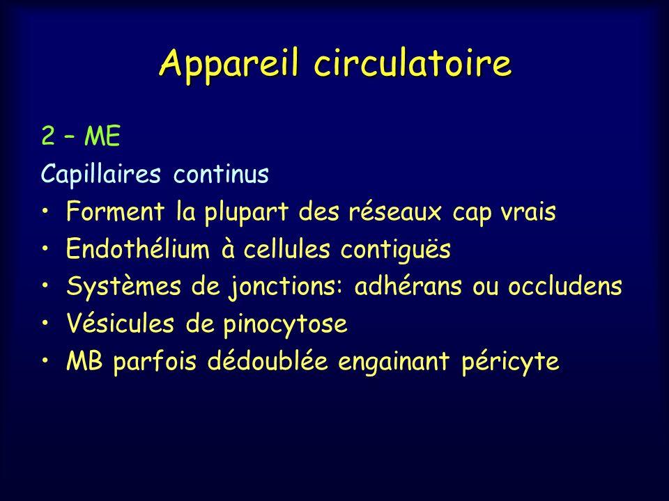 Appareil circulatoire 2 – ME Capillaires continus Forment la plupart des réseaux cap vrais Endothélium à cellules contiguës Systèmes de jonctions: adh