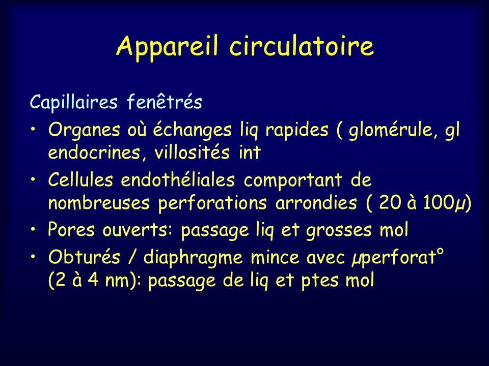 Appareil circulatoire Capillaires fenêtrés Organes où échanges liq rapides ( glomérule, gl endocrines, villosités int Cellules endothéliales comportan