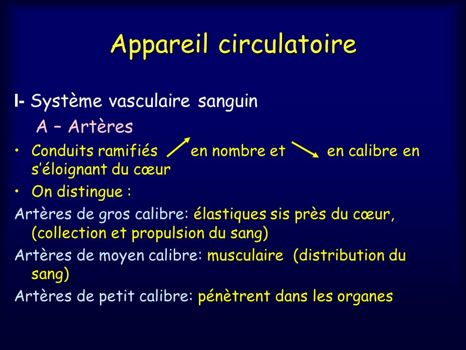 Appareil circulatoire I- Système vasculaire sanguin A – Artères Conduits ramifiés en nombre et en calibre en séloignant du cœur On distingue : Artères