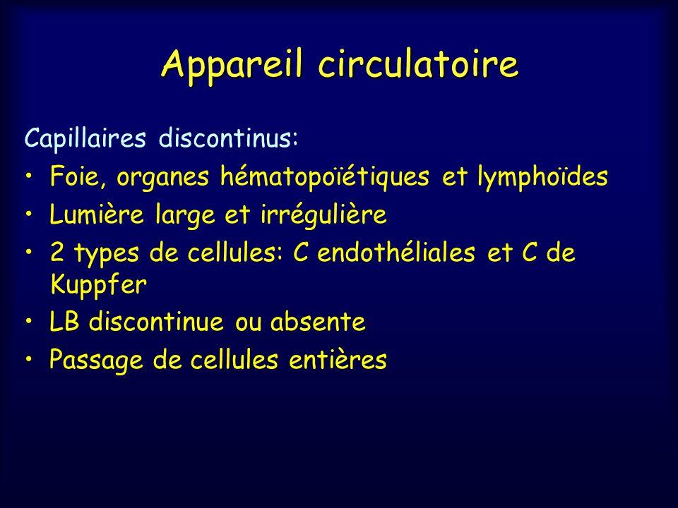 Appareil circulatoire Capillaires discontinus: Foie, organes hématopoïétiques et lymphoïdes Lumière large et irrégulière 2 types de cellules: C endoth