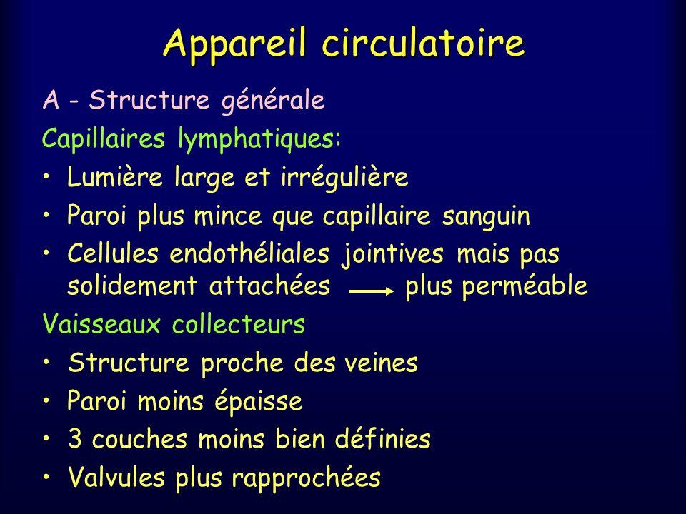 Appareil circulatoire A - Structure générale Capillaires lymphatiques: Lumière large et irrégulière Paroi plus mince que capillaire sanguin Cellules e