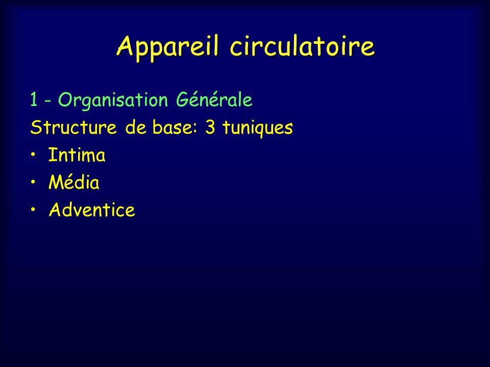 Appareil circulatoire c- Artères de grand calibre: artères élastiques Aorte et ses branches: carotide, sous Clavière et rénale Intima: Endothélium et tissu sous-endothélial fin Média: très épaisse Fibres élastiques : en lames concentriques toute lépaisseur ( >50 lames ô aorte), épaisses, fenêtrées