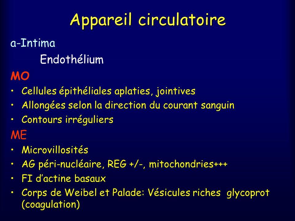 Appareil circulatoire B – Histophysiologie Régulation du volume et de la composition du liquide interstitiel Liaison entre absorption intestinale et circulation veineuse Liaison entre les organes lymphoïdes et le sang circulant