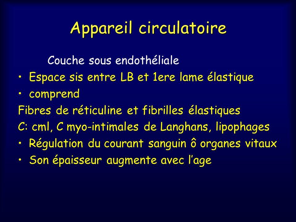 Appareil circulatoire b- Média Tunique moyenne séparée de lintima par LEI Cellules musculaires lisses Éléments conjonctifs extra-cellulaires Fibres collagènes et élastiques Substance amorphe et microfibril (glycoprot, GAG) Architecture variable en f° calibre