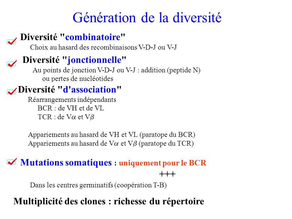 Génération de la diversité Diversité