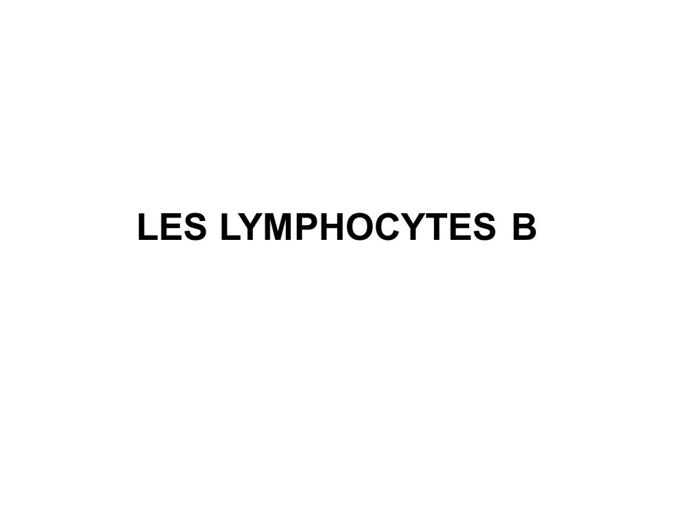 LES LYMPHOCYTES B