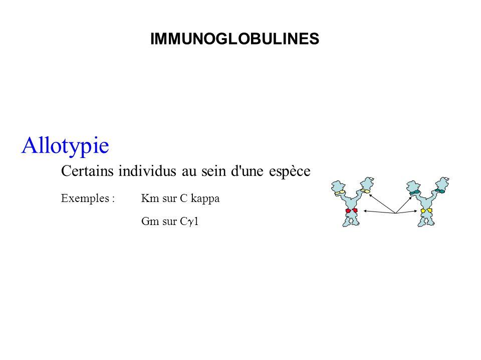Allotypie Certains individus au sein d'une espèce Exemples : Km sur C kappa Gm sur C 1 IMMUNOGLOBULINES
