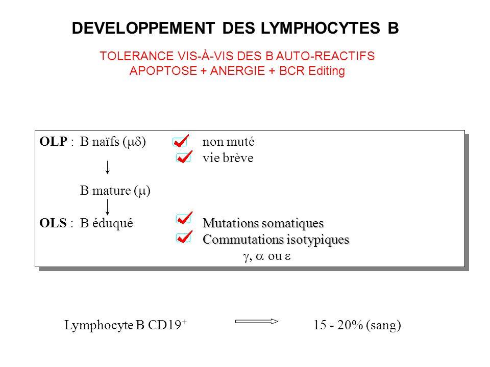 Lymphocyte B CD19 + 15 - 20% (sang) OLP :B naïfs ( ) non muté vie brève B mature ( ) Mutations somatiques OLS : B éduqué Mutations somatiques Commutat