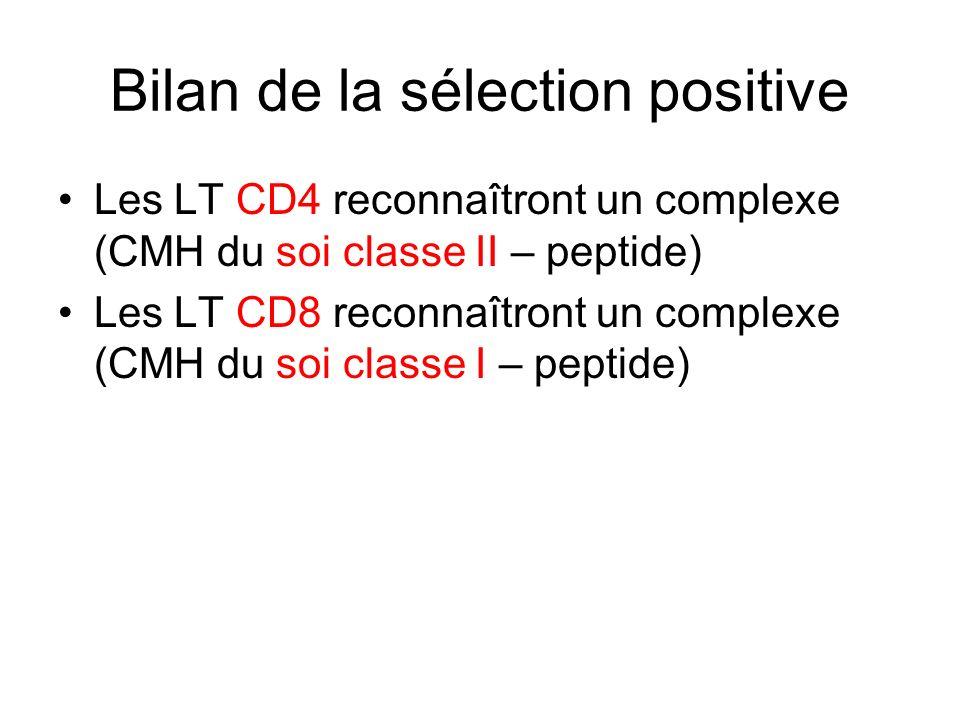 Bilan de la sélection positive Les LT CD4 reconnaîtront un complexe (CMH du soi classe II – peptide) Les LT CD8 reconnaîtront un complexe (CMH du soi