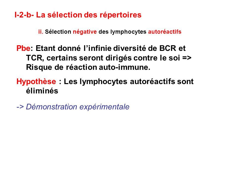 I-2-b- La sélection des répertoires ii. Sélection négative des lymphocytes autoréactifs Pbe: Etant donné linfinie diversité de BCR et TCR, certains se