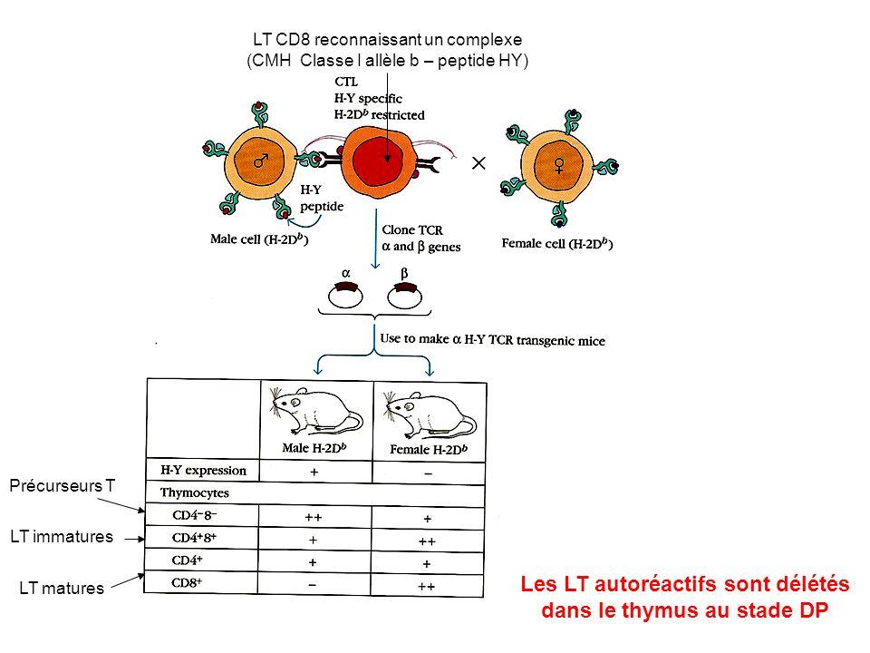 LT immatures LT matures Précurseurs T LT CD8 reconnaissant un complexe (CMH Classe I allèle b – peptide HY) Les LT autoréactifs sont délétés dans le t