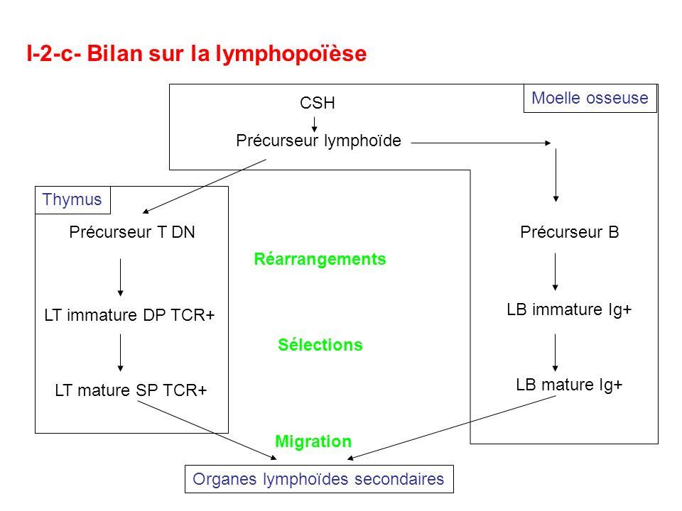 I-2-c- Bilan sur la lymphopoïèse Précurseur T DN Réarrangements CSH Précurseur lymphoïde Thymus LT mature SP TCR+ Sélections LT immature DP TCR+ Précu