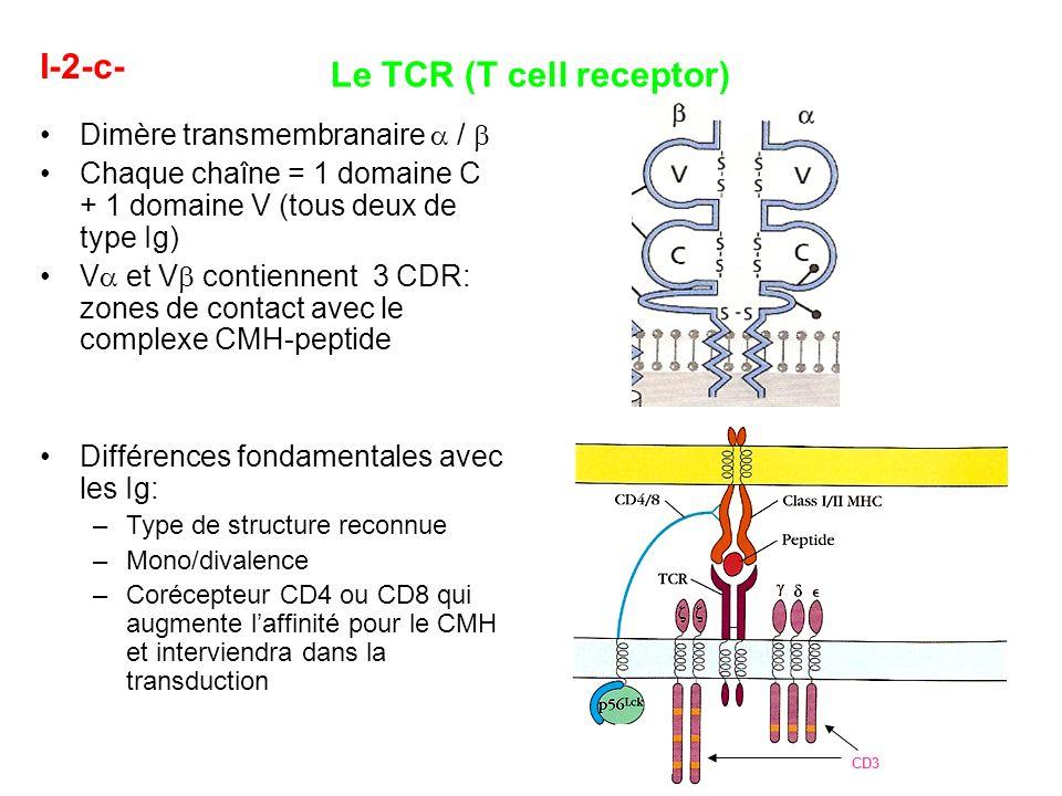 I-2-c- Le TCR (T cell receptor) Dimère transmembranaire / Chaque chaîne = 1 domaine C + 1 domaine V (tous deux de type Ig) V et V contiennent 3 CDR: z