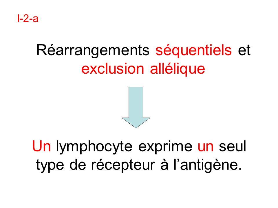 Bilan : La sélection des lymphocytes T dans le thymus au cours de leur différenciation
