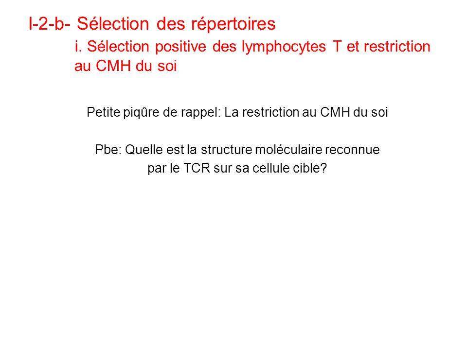 Conclusion sur les sélections >90% des LT immatures ne passent pas la barrière sélective Tout échec à une sélection (>0 ou <0) induit une apoptose du lymphocyte rejeté 2 conséquences des sélections: –Restriction au CMH du soi pour les LT –Tolérance au soi