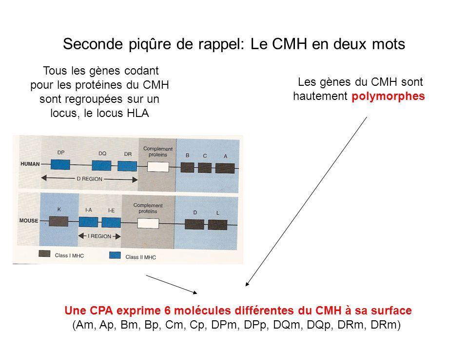 Seconde piqûre de rappel: Le CMH en deux mots Tous les gènes codant pour les protéines du CMH sont regroupées sur un locus, le locus HLA Une CPA expri