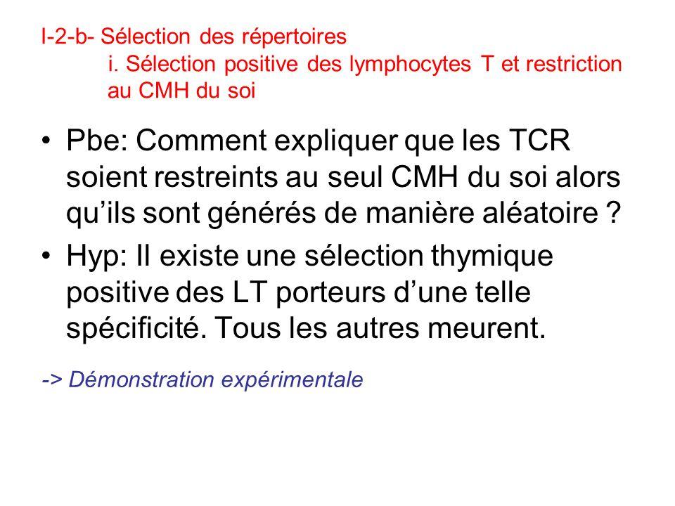 I-2-c- Le TCR (T cell receptor) Dimère transmembranaire / Chaque chaîne = 1 domaine C + 1 domaine V (tous deux de type Ig) V et V contiennent 3 CDR: zones de contact avec le complexe CMH-peptide Différences fondamentales avec les Ig: –Type de structure reconnue –Mono/divalence –Corécepteur CD4 ou CD8 qui augmente laffinité pour le CMH et interviendra dans la transduction CD3