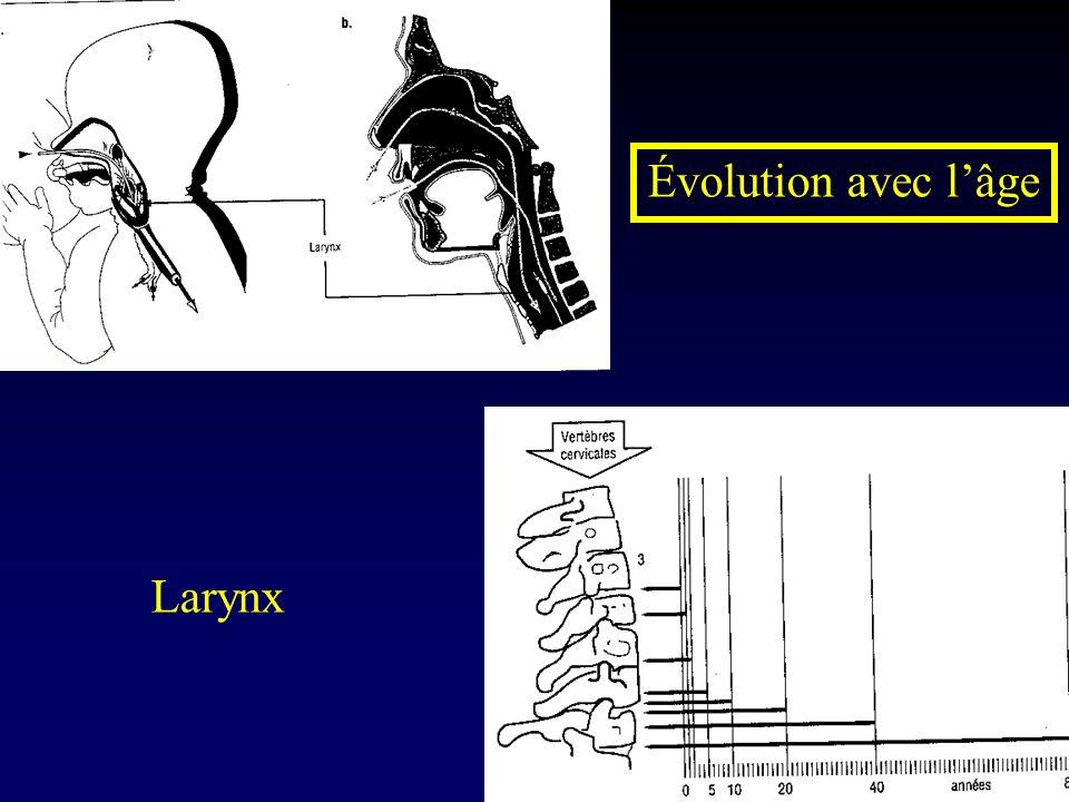 Évolution avec lâge Larynx
