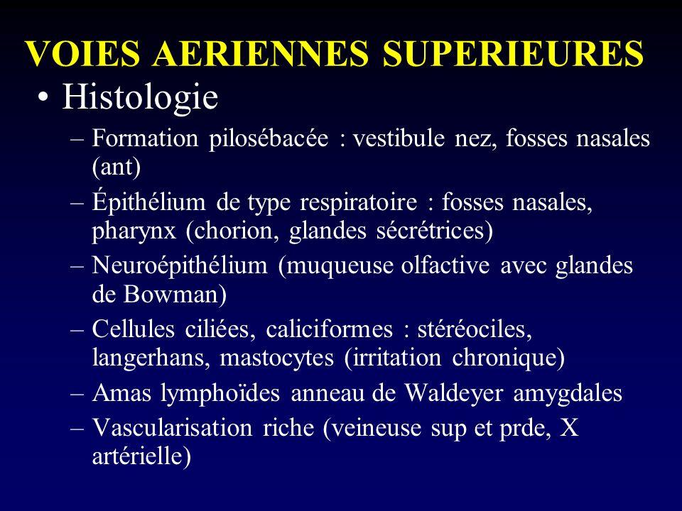 VOIES AERIENNES SUPERIEURES Histologie –Formation pilosébacée : vestibule nez, fosses nasales (ant) –Épithélium de type respiratoire : fosses nasales,