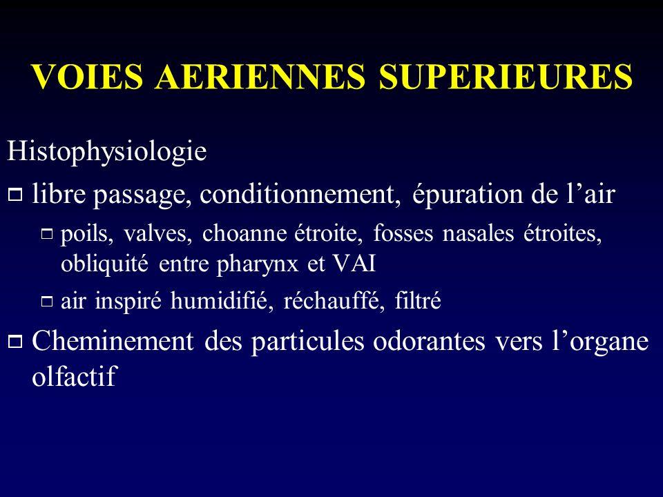 VOIES AERIENNES SUPERIEURES Histophysiologie libre passage, conditionnement, épuration de lair poils, valves, choanne étroite, fosses nasales étroites