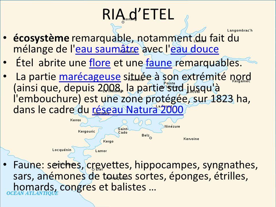 RIA dETEL écosystème remarquable, notamment du fait du mélange de l'eau saumâtre avec l'eau douceeau saumâtreeau douce Étel abrite une flore et une fa