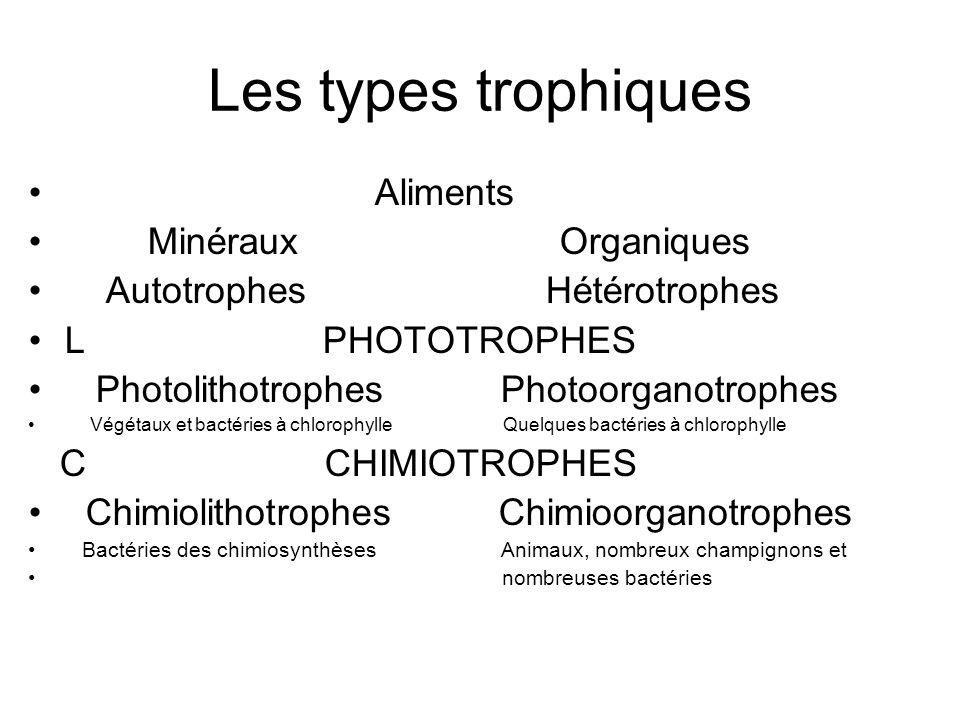 Les types trophiques Aliments Minéraux Organiques Autotrophes Hétérotrophes L PHOTOTROPHES Photolithotrophes Photoorganotrophes Végétaux et bactéries