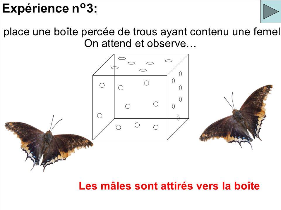 Expérience n°3: On place une boîte percée de trous ayant contenu une femelle. Les mâles sont attirés vers la boîte On attend et observe…