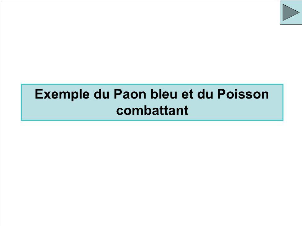 Exemple du Paon bleu et du Poisson combattant