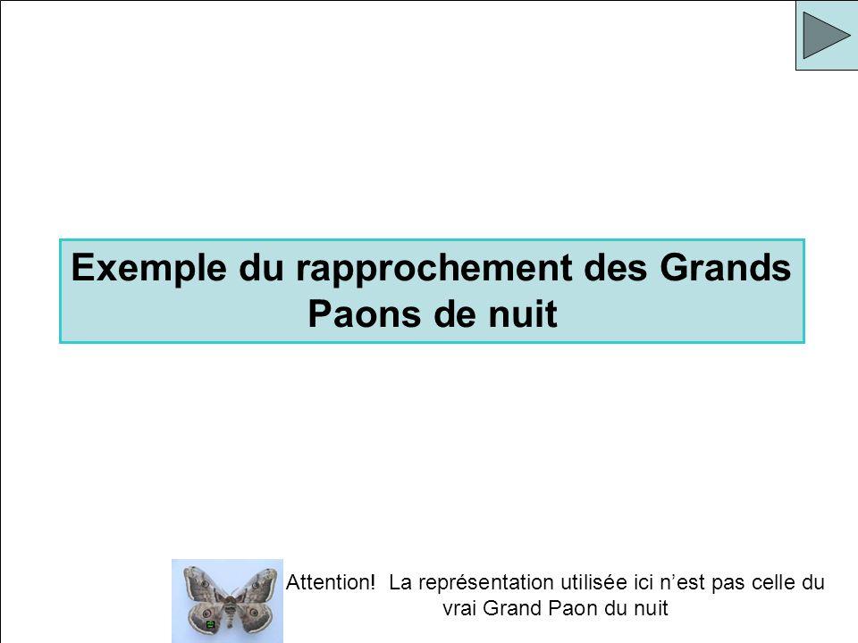 Attention! La représentation utilisée ici nest pas celle du vrai Grand Paon du nuit Exemple du rapprochement des Grands Paons de nuit