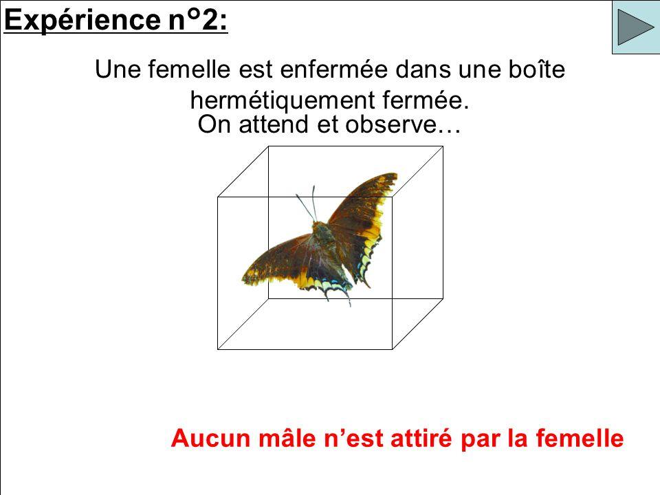 Expérience n°2: Une femelle est enfermée dans une boîte hermétiquement fermée. Aucun mâle nest attiré par la femelle On attend et observe…