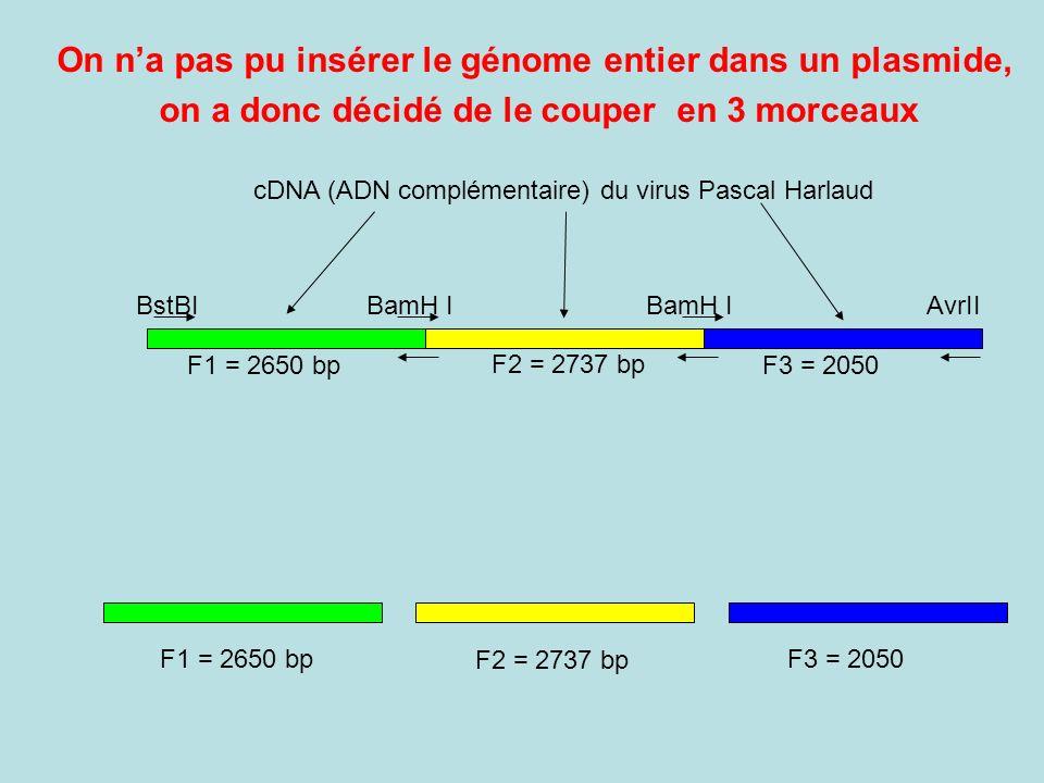 cDNA (ADN complémentaire) du virus Pascal Harlaud F1 = 2650 bp F2 = 2737 bp F3 = 2050 BstBIBamH I AvrII On na pas pu insérer le génome entier dans un plasmide, on a donc décidé de le couper en 3 morceaux F1 = 2650 bp F2 = 2737 bp F3 = 2050