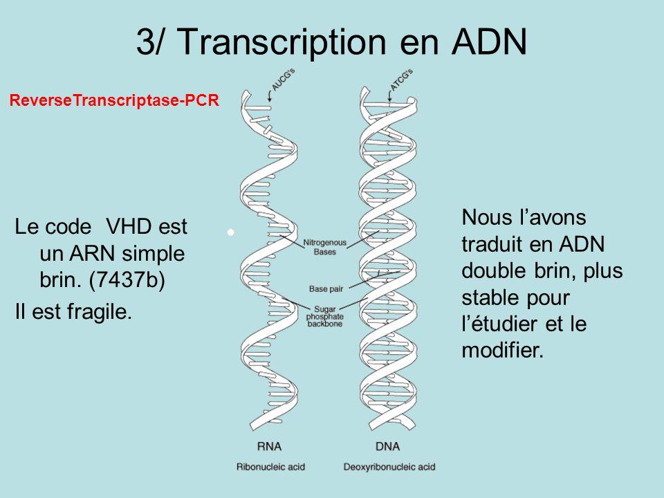3/ Transcription en ADN Le code VHD est un ARN simple brin. (7437b) Il est fragile. Nous lavons traduit en ADN double brin, plus stable pour létudier