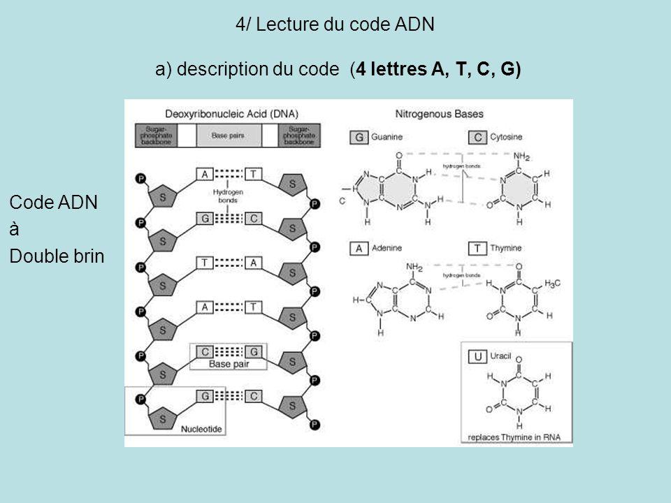 4/ Lecture du code ADN a) description du code (4 lettres A, T, C, G) Code ADN à Double brin