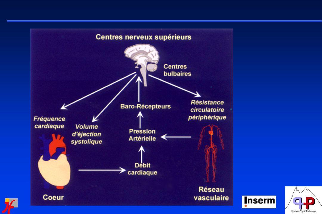 Systèmes dactivation de léveil et interactions avec orexine/hypocrétine Bases de compréhension du contrôle cardio - vasculaire