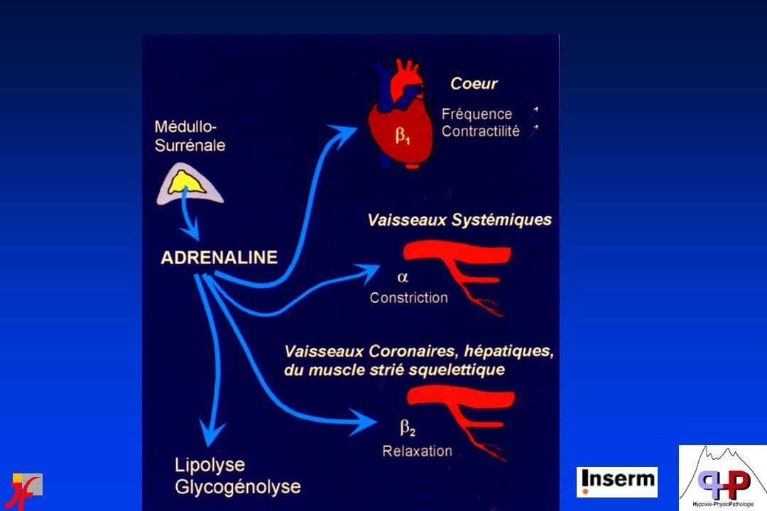 SNC, sommeil et contrôle cardiovasculaire Transmetteurs Du tronc cérébral Transmetteurs hypothalamiques Orexin Histamine AcetylcholineThalamus Tronc cérébral Hypothalamus GABA Acetylcholine Noradrenaline Serotonine - - - -