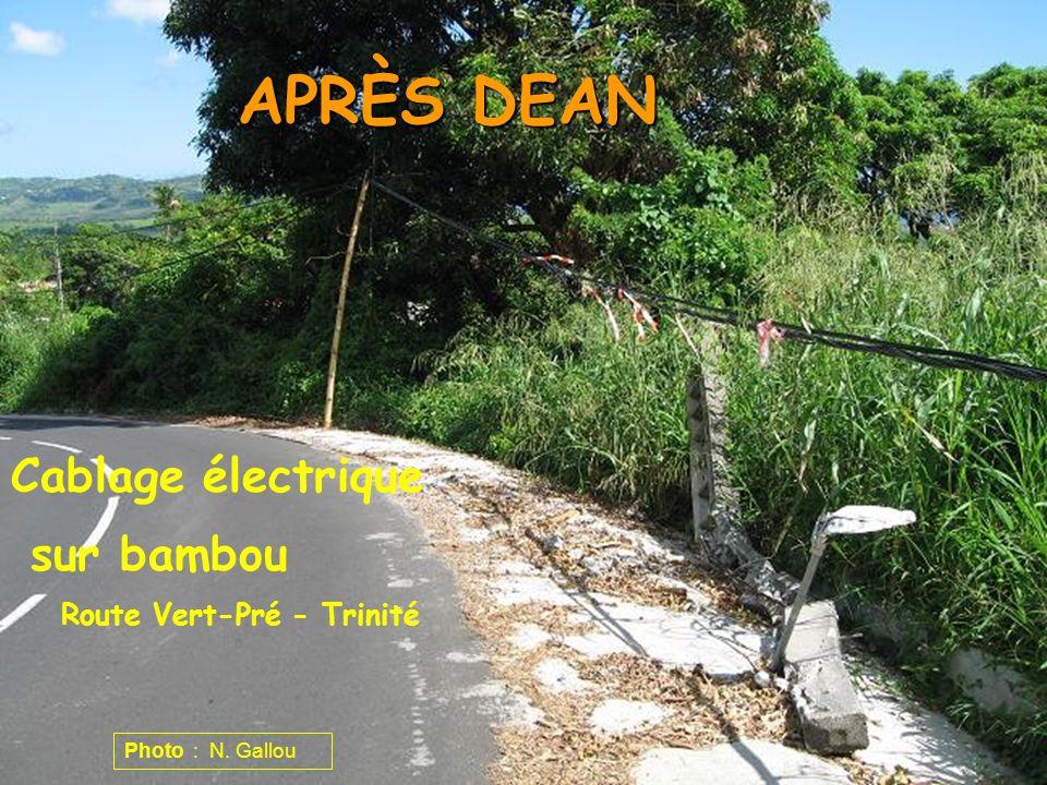 APRÈS DEAN Cablage électrique sur bambou Route Vert-Pré - Trinité Photo : N. Gallou