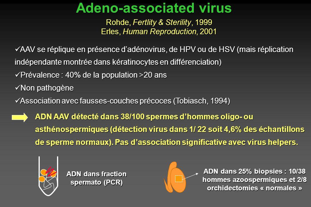 AAV se réplique en présence dadénovirus, de HPV ou de HSV (mais réplication indépendante montrée dans kératinocytes en différenciation) AAV se répliqu