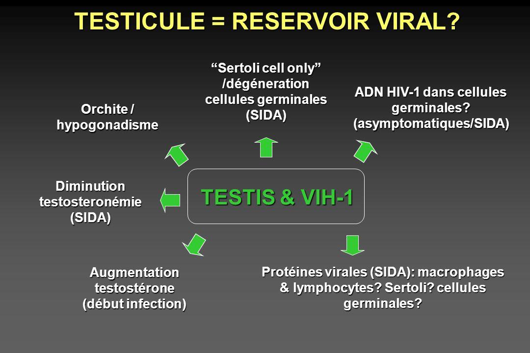 TESTICULE = RESERVOIR VIRAL? Orchite / hypogonadisme TESTIS & VIH-1 Sertoli cell only /dégéneration cellules germinales (SIDA) ADN HIV-1 dans cellules