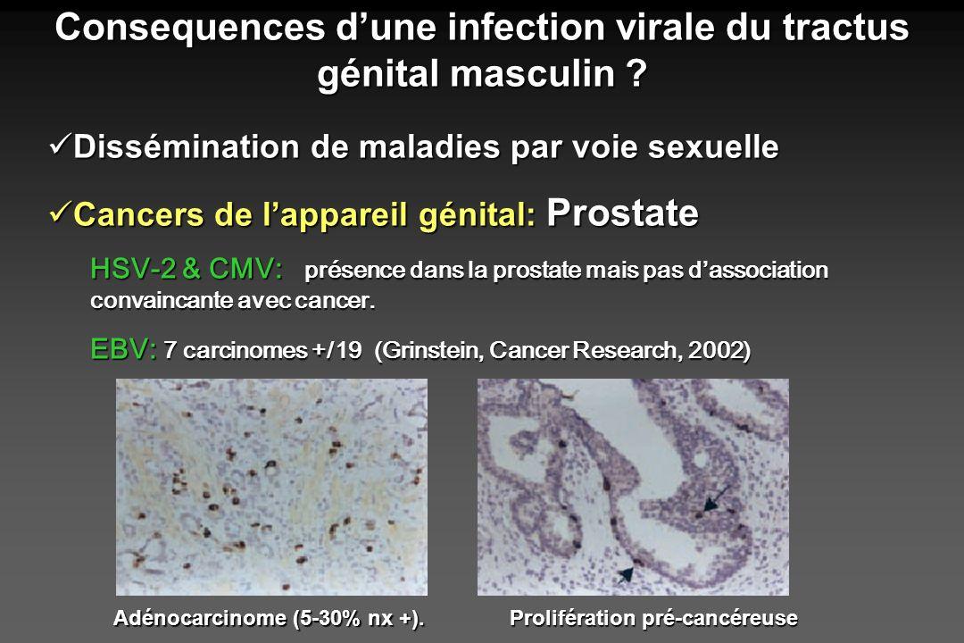 Peu détudes = peu de certitudes… Infections virales & conséquences sur lappareil reproducteur masculin…