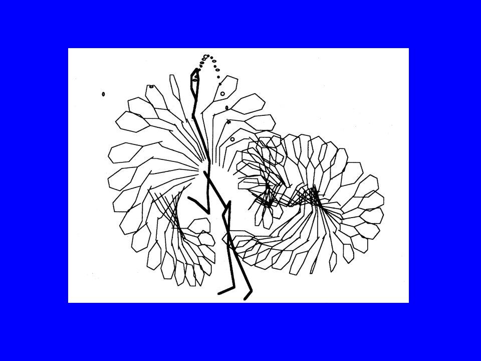 La rotation croît linéairement avec langle Si on augmente trop langle, la vitesse linéaire chute 30° est un bon angle : ce qui donne une une rotation de 50% de sa valeur maximale et une vitesse à 85% de sa valeur maximale