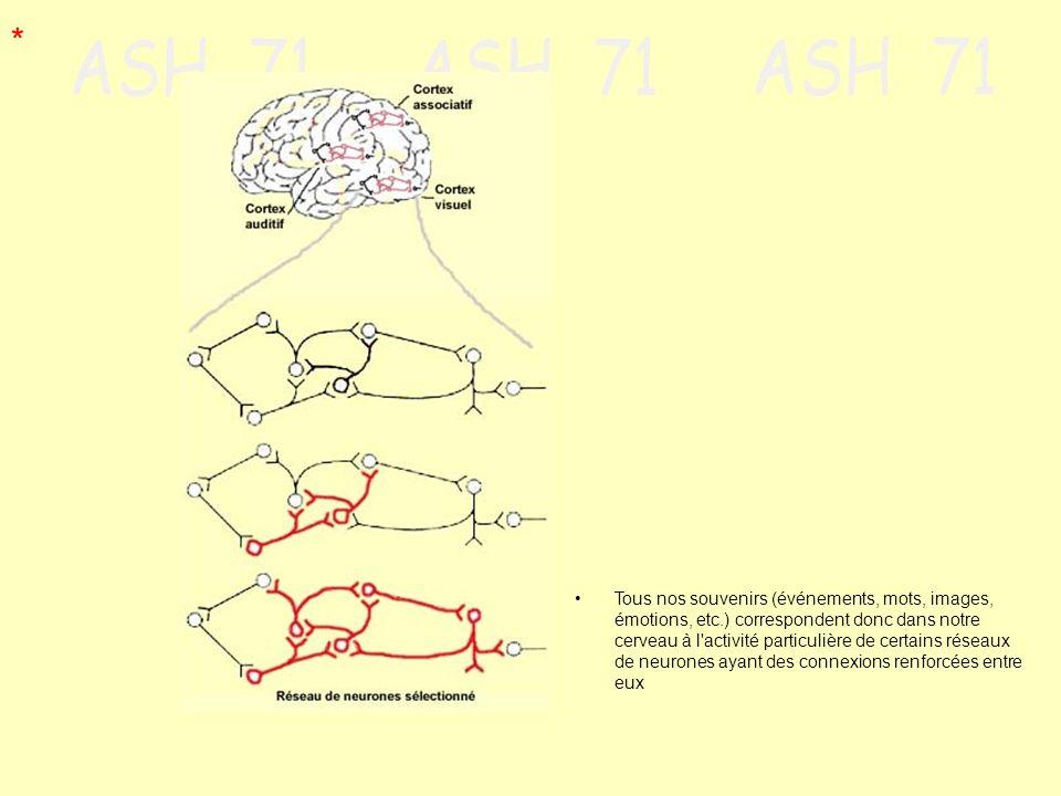 Tous nos souvenirs (événements, mots, images, émotions, etc.) correspondent donc dans notre cerveau à l'activité particulière de certains réseaux de n