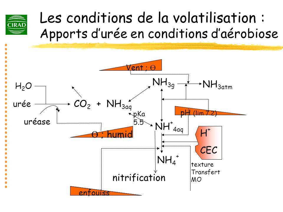 Les conditions de la volatilisation : Apports durée en conditions daérobiose uréase Vent ; Ө CO 2 + NH 3aq H + CEC NH 4 + enfouiss Ө ; humid urée H2OH