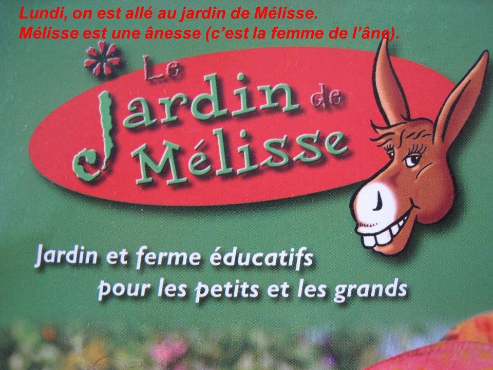 Lundi, on est allé au jardin de Mélisse. Mélisse est une ânesse (cest la femme de lâne).