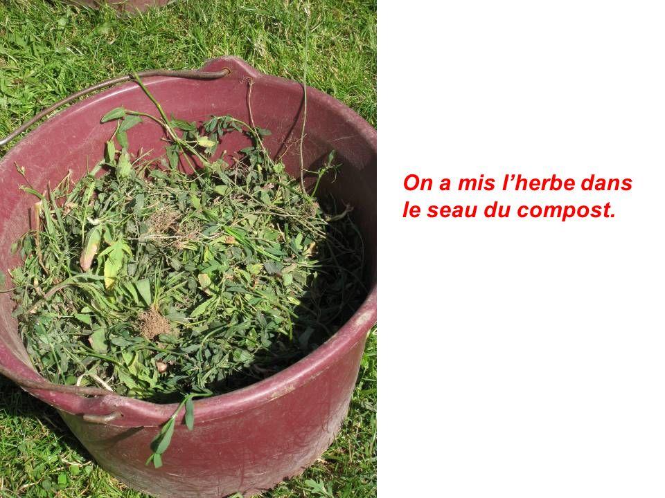 On a mis lherbe dans le seau du compost.