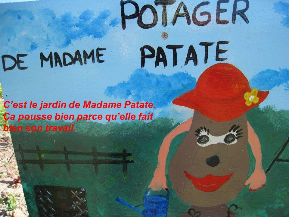 Cest le jardin de Madame Patate. Ça pousse bien parce quelle fait bien son travail.
