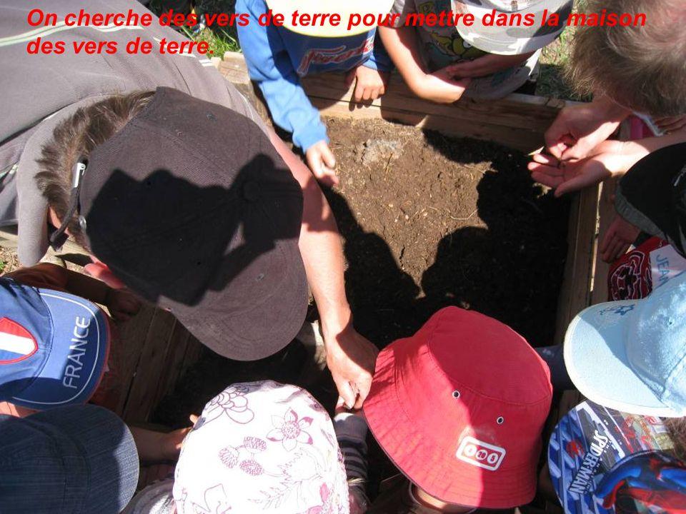 On cherche des vers de terre pour mettre dans la maison des vers de terre.