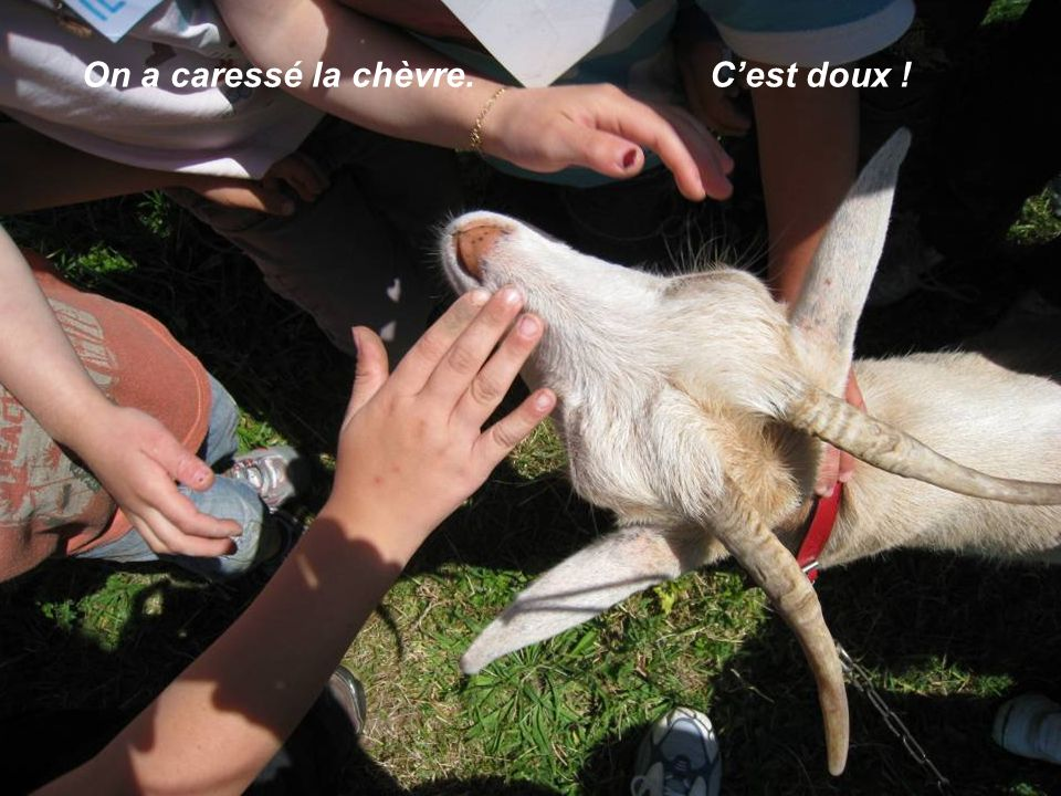 On a caressé la chèvre. Cest doux !