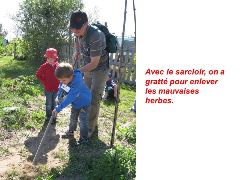 Avec le sarcloir, on a gratté pour enlever les mauvaises herbes.