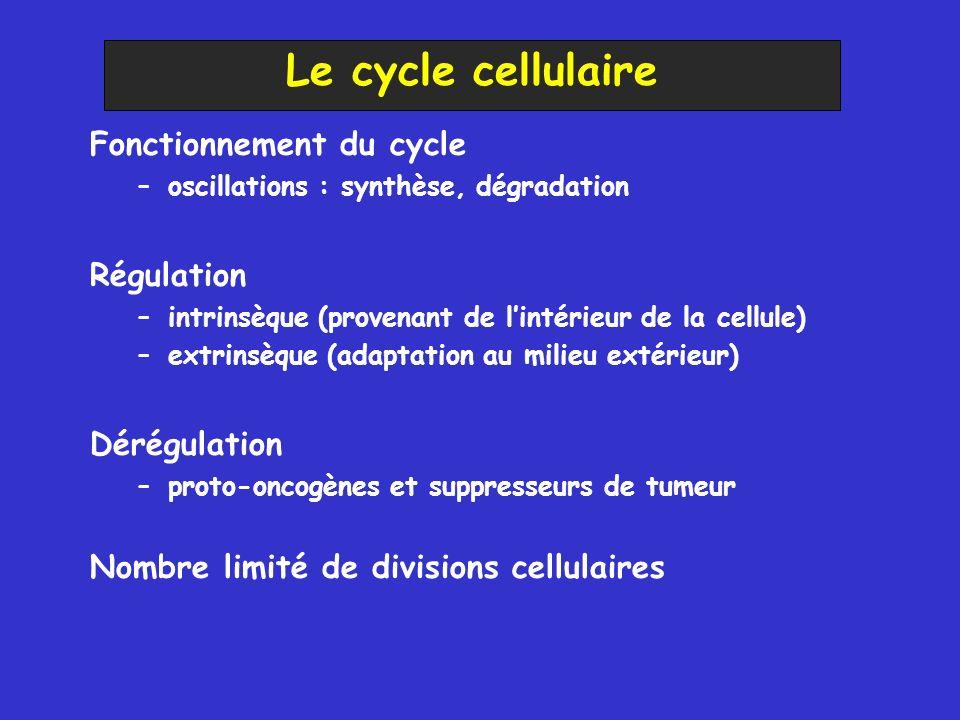 Fonctionnement du cycle –oscillations : synthèse, dégradation Régulation –intrinsèque (provenant de lintérieur de la cellule) –extrinsèque (adaptation