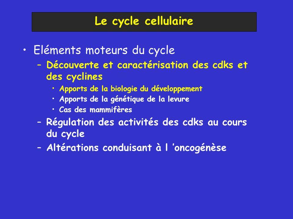 Eléments moteurs du cycle –Découverte et caractérisation des cdks et des cyclines Apports de la biologie du développement Apports de la génétique de la levure Cas des mammifères –Régulation des activités des cdks au cours du cycle –Altérations conduisant à l oncogénèse Le cycle cellulaire